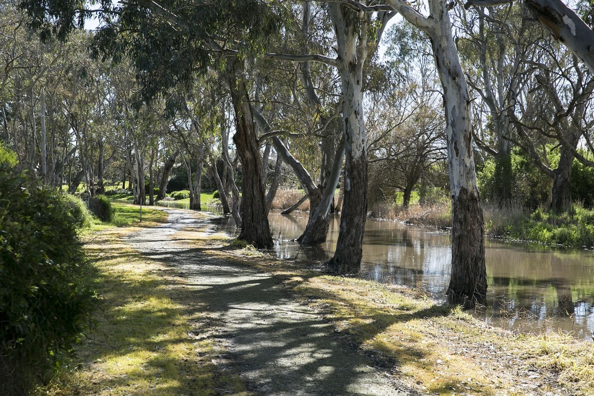 Naracoorte Creek Walk