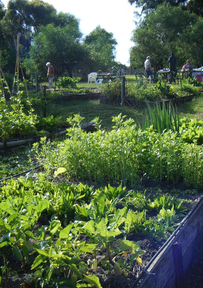 Naracoorte Community Gardens