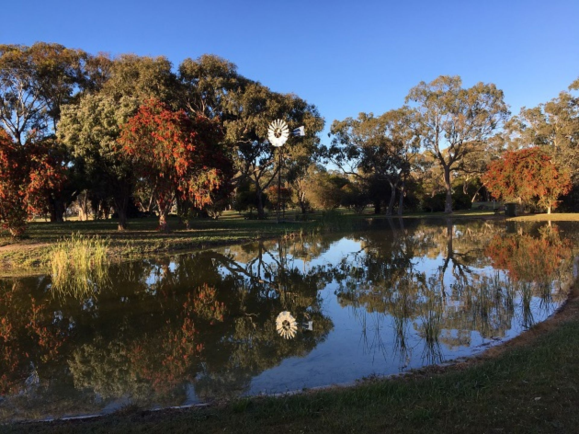 Jubilee Park - Lucindale