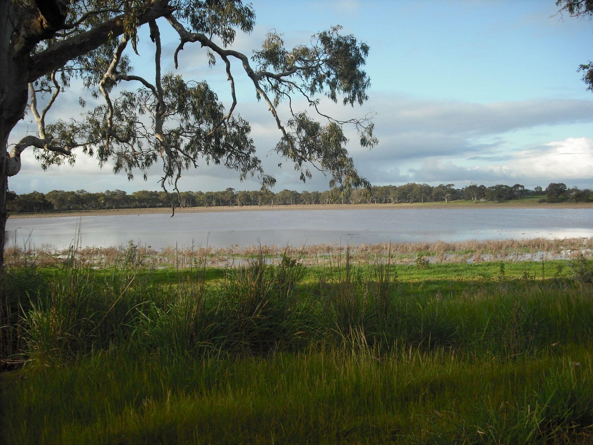 Cockatoo Lake